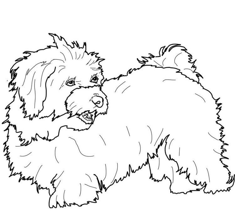 Maltese Dog Coloring Pages Puppies Maltese Dogs Dogs Maltese
