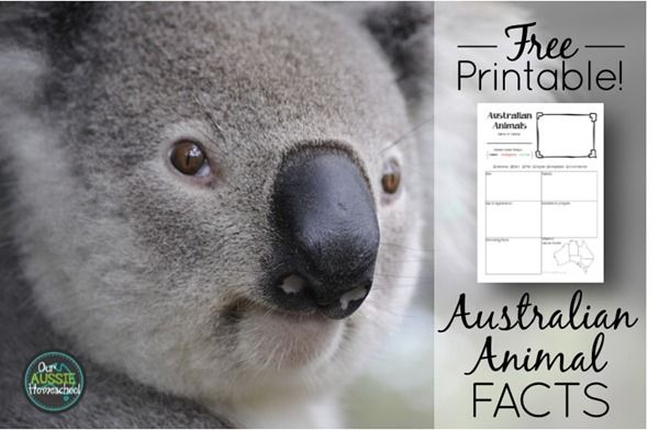 Free Printable Australian Animal Fact Sheet Perfect For Unit