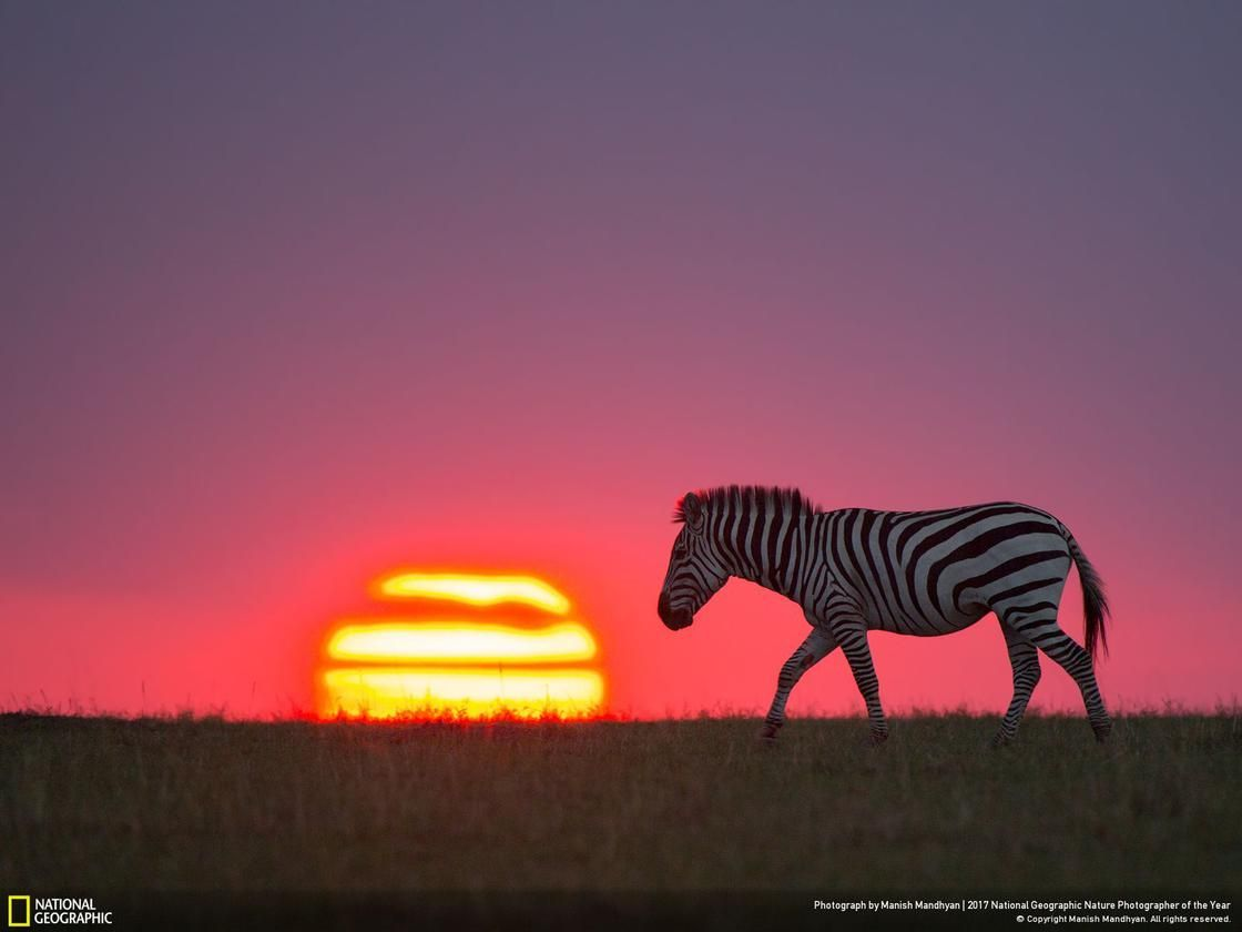 30 Incredible Photos From The National Geographic Nature Photographer Of The Year 2017 Wildlife Photography National Geographic National Geographic Animals Wildlife Photography