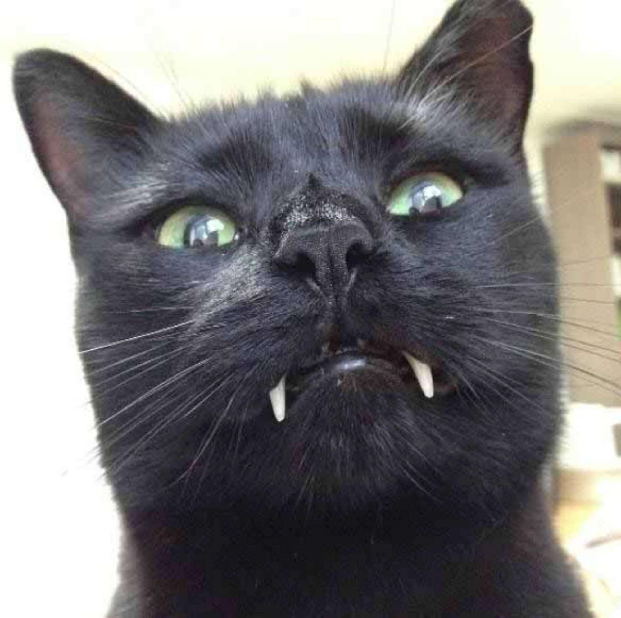 Salvo per miracolo, il gattino nero adottato e curato è