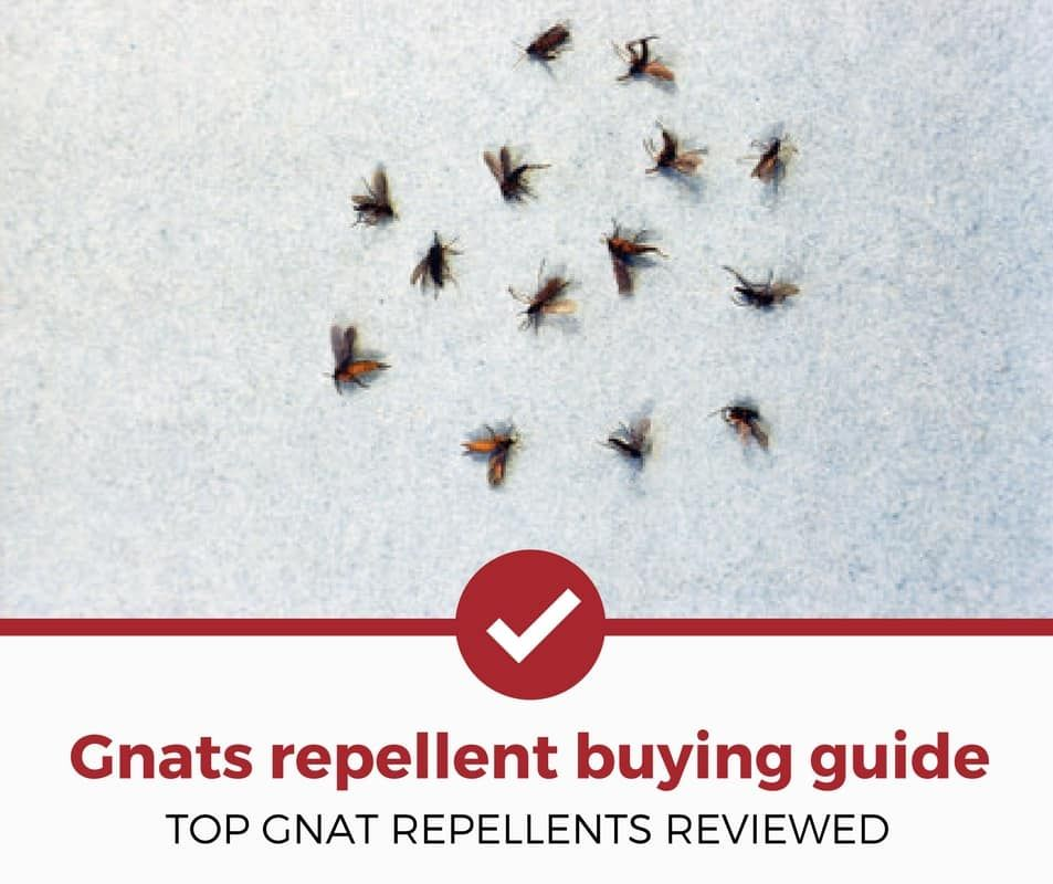 Looking For The Best Gnat Repellents To Annihilate These Pesky Bugs You Re In The Right Place In This Pest Strategies Best Pest Control Repellents Pest Control
