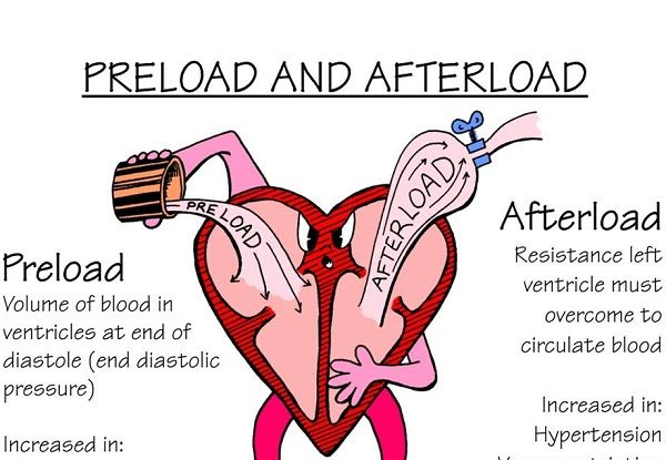 venous return and cardiac output relationship tips