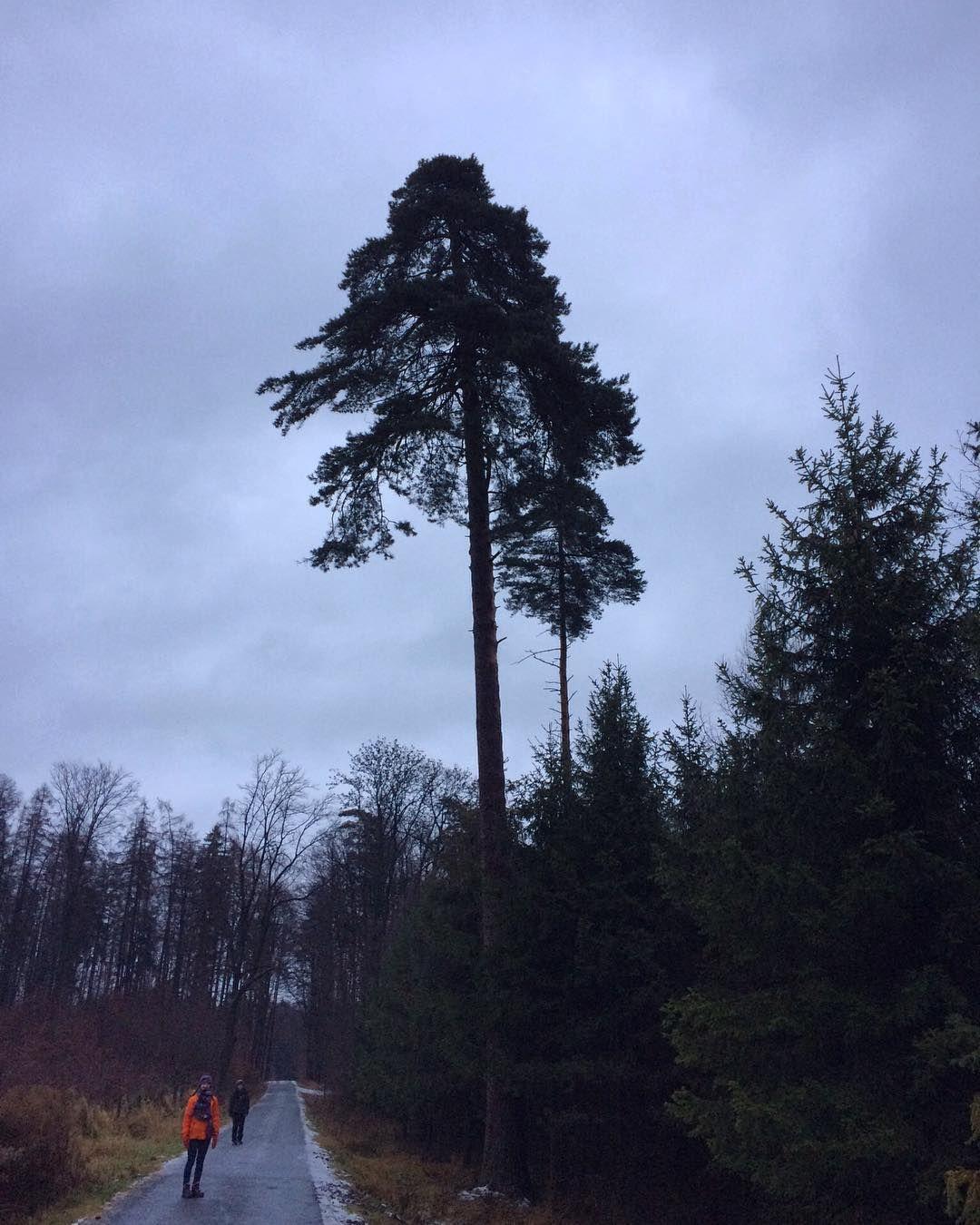 #naturelovers #forest #famillytrip #walking #pine #japanesefeeling Japanerie pro Honzíka!A že jich tam bylo!☁️❄️#klubkocestuje