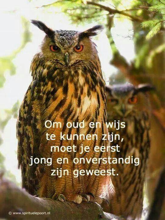 Goede Uilen wijsheid (met afbeeldingen) | Citaat foto, Teksten, Citaten PU-75