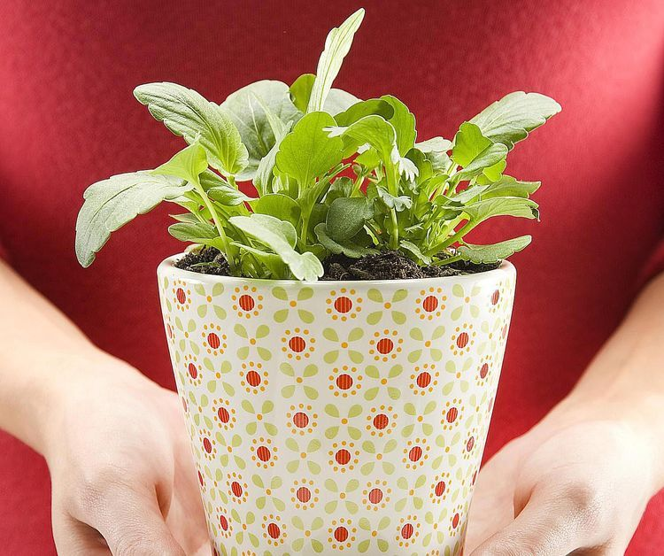 Feng Shui Use of Plants in the Bedroom Just Say No Feng shui and