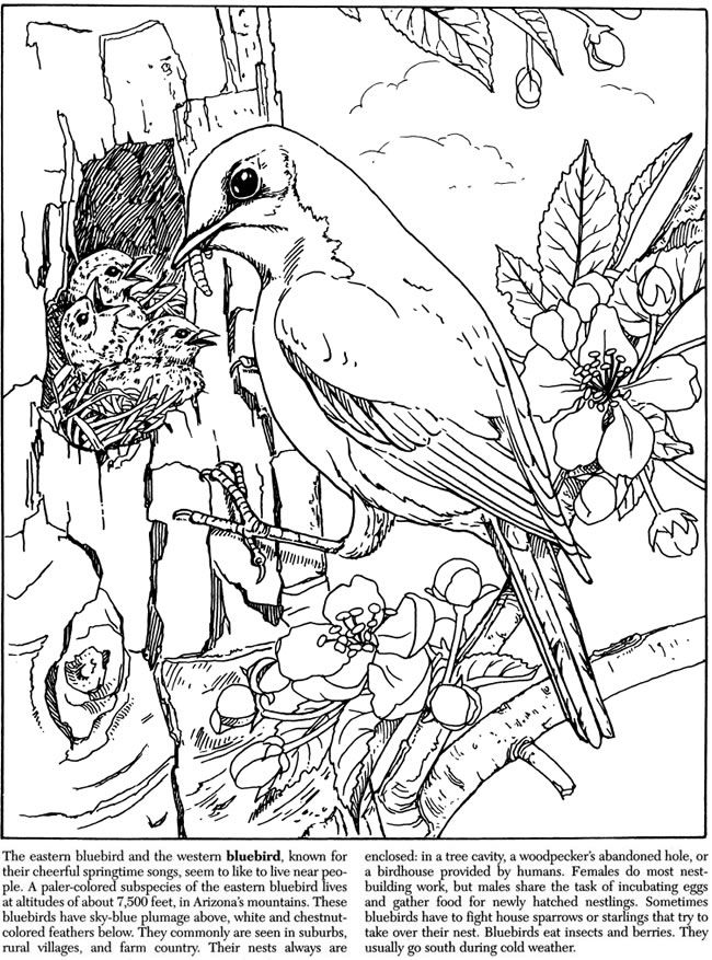 Welcome To Dover Publications Coloring Pages Nature Bird Coloring Pages Animal Coloring Pages