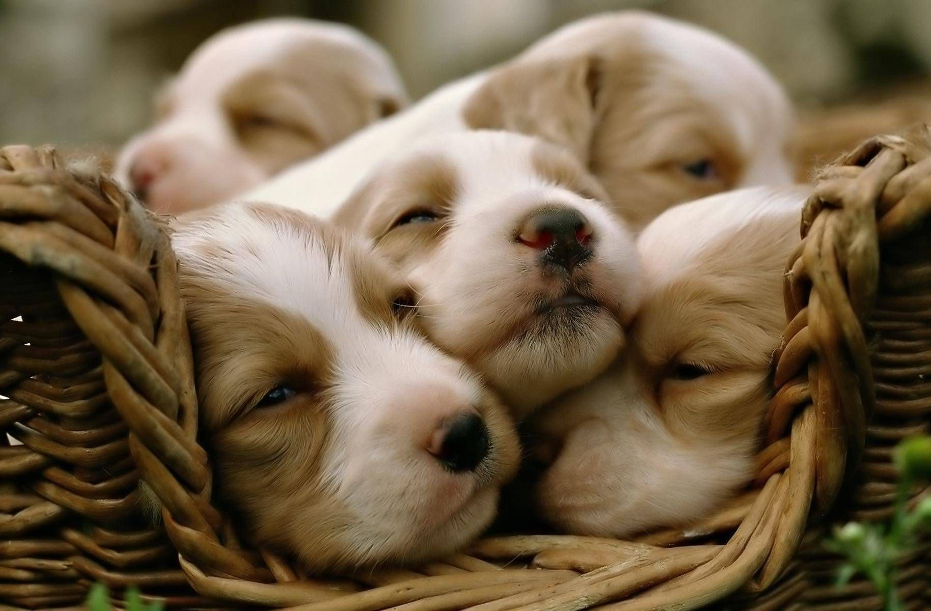 cute puppies & dogs pics
