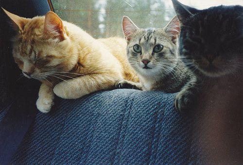 catz in my backseat