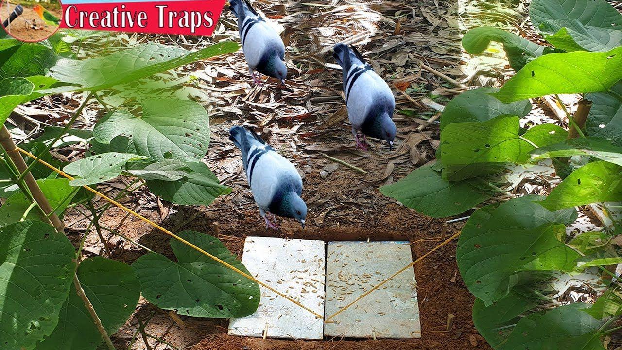 Easy bird trap using wood deep hole trap