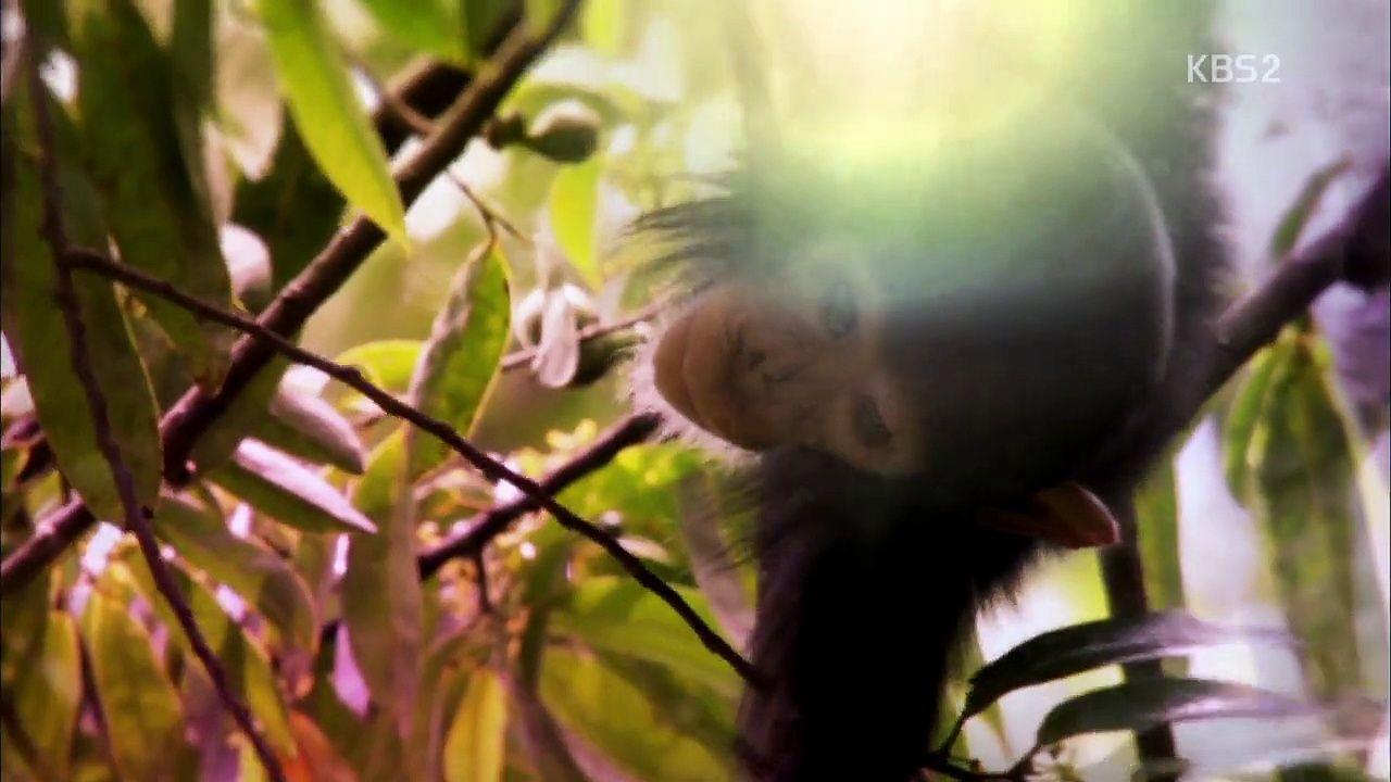 동물의 세계 생존의 대가들 1 12월 8일 화 http heymid com eb