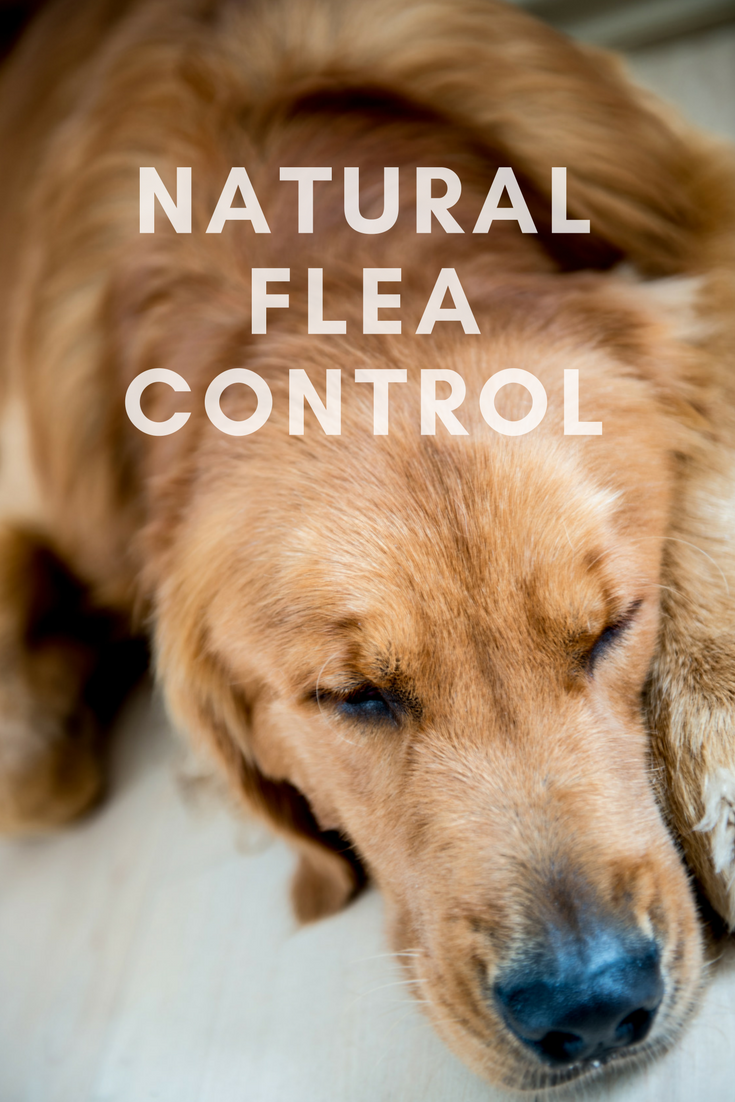 Use The Following Tactics For Natural Flea Control.