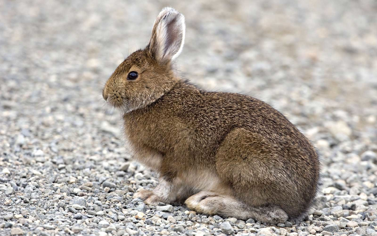 A Baby Rabbit Caused an Airport Bomb Scare and Now Its