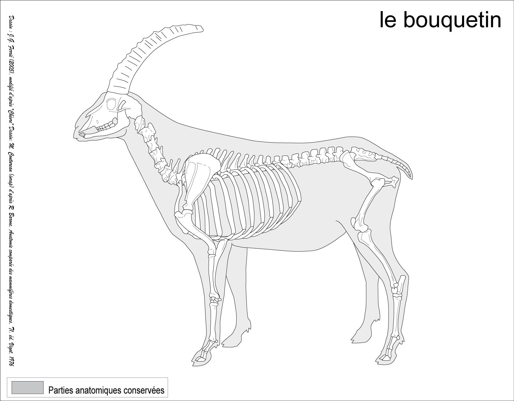 Lujo Anatomía Huesos De Vaca Ideas - Anatomía de Las Imágenesdel ...