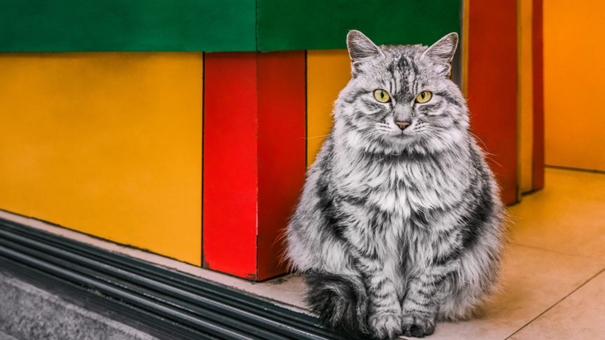 These Are The Most Purrfect Cat Pics For International