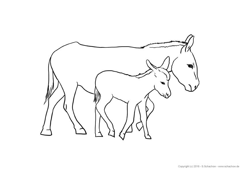 kostenlose zeichnungen von tieren  poster bilder  pdf