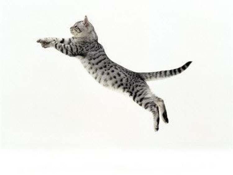 CC Silver Sleeping Kitten Cat Clip On