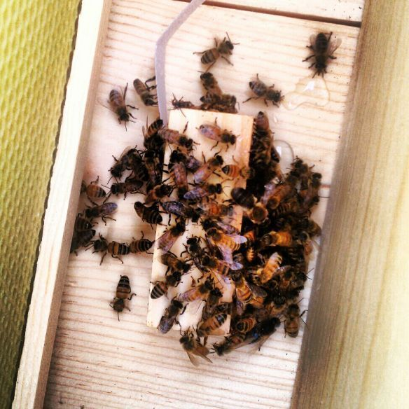 Lessons for a beginner backyard Beekeeper! The one thing ...