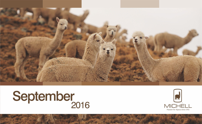 Michell Calendar- Andean Heritage Colour Inspiration - September 2016  #alpaca #alpacayarns #finestperuvianalpaca #andeanheritage