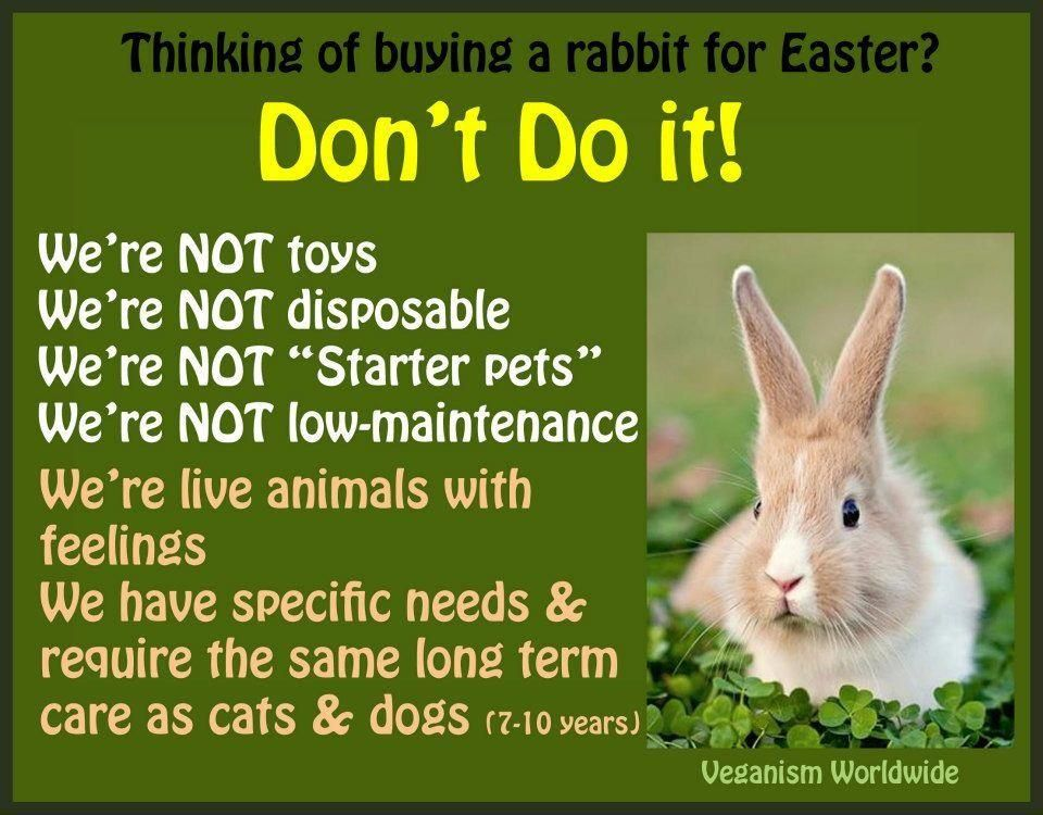 Think beyond easter dont buy pets at easter or any holiday do not give bunnies as a cute easter gift for a child a bunny is at least a 10 year commitment they are not able to fend for themselves if you release negle Image collections