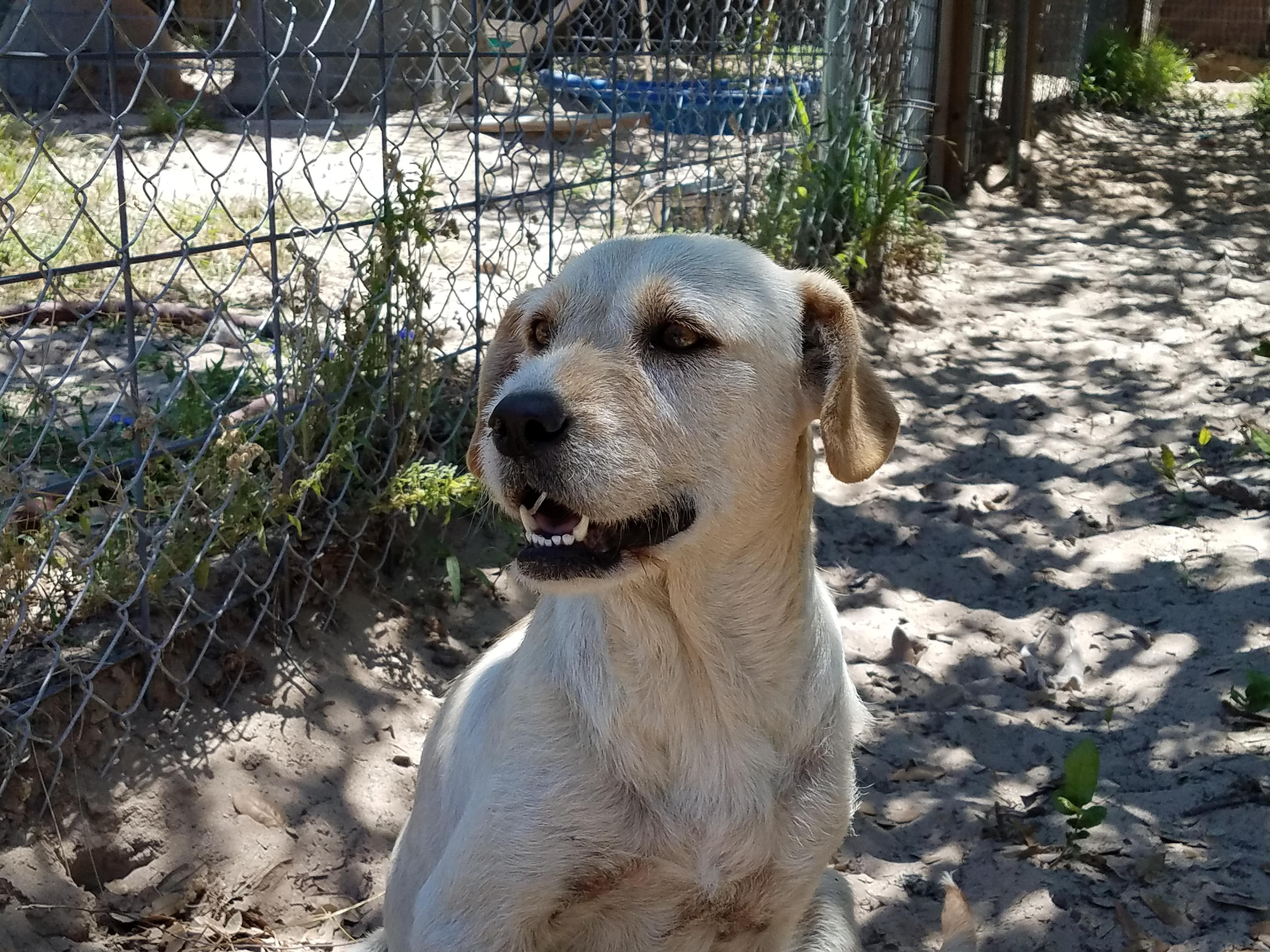Adopt Sunny On Search Dogs Dogs Dog Grooming Dog Search