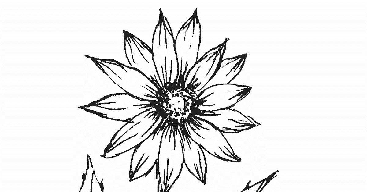 16 Lukisan Taman Bunga Hitam Putih Sketsa Bunga Gambar Bunga Matahari Hitam Putih Untuk Diwarnai Download 60 Gambar Mewarnai S Di 2020 Sketsa Seni Kanvas Lukisan