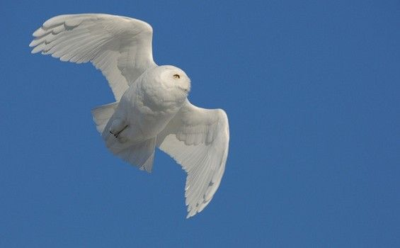 Photo of Wonders of Nature – 20 ALBINO ANIMALS (6/5/2013) Animals: Birds (CTS)