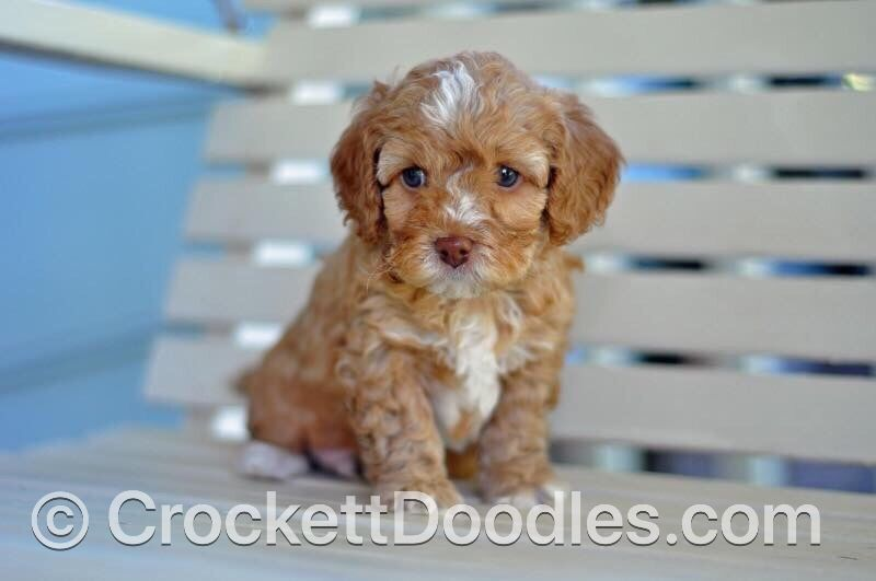 To Find Out More About The Crockett Doodles Program And Our