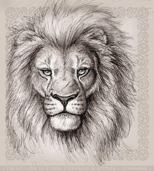 Pin By Lexie Clark On House Lion Head Drawing Lion Face Drawing Lion Head Tattoos Draw the lions eye with the top part of the iris/and pupil covered by the top eyelid (or the lion will look like he has a crazy stare). lion head drawing