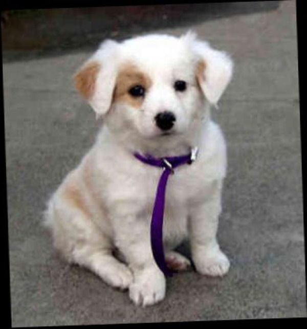 Mixed Breed Dogs Good With Families