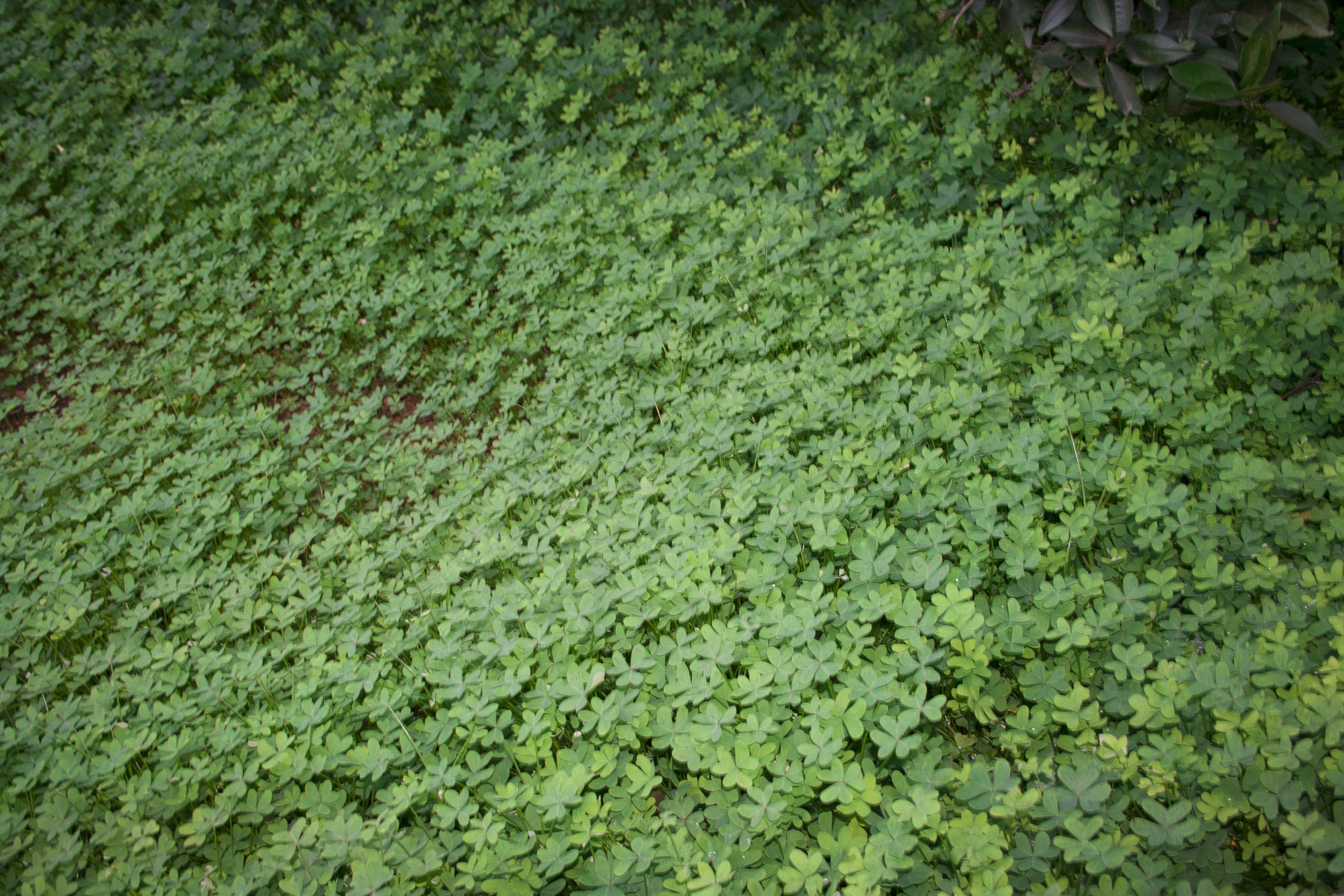 En muchos campos de la zona suelen dejar crecer els agrets una planta herb cea que permite - Paisajismo valencia ...