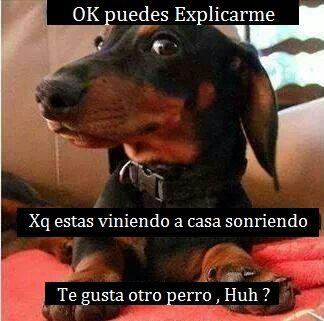 Pin By Alza La Voz Ecologia On Alza La Voz Ecologia Funny Dachshund Dachshund Memes Funny Dogs