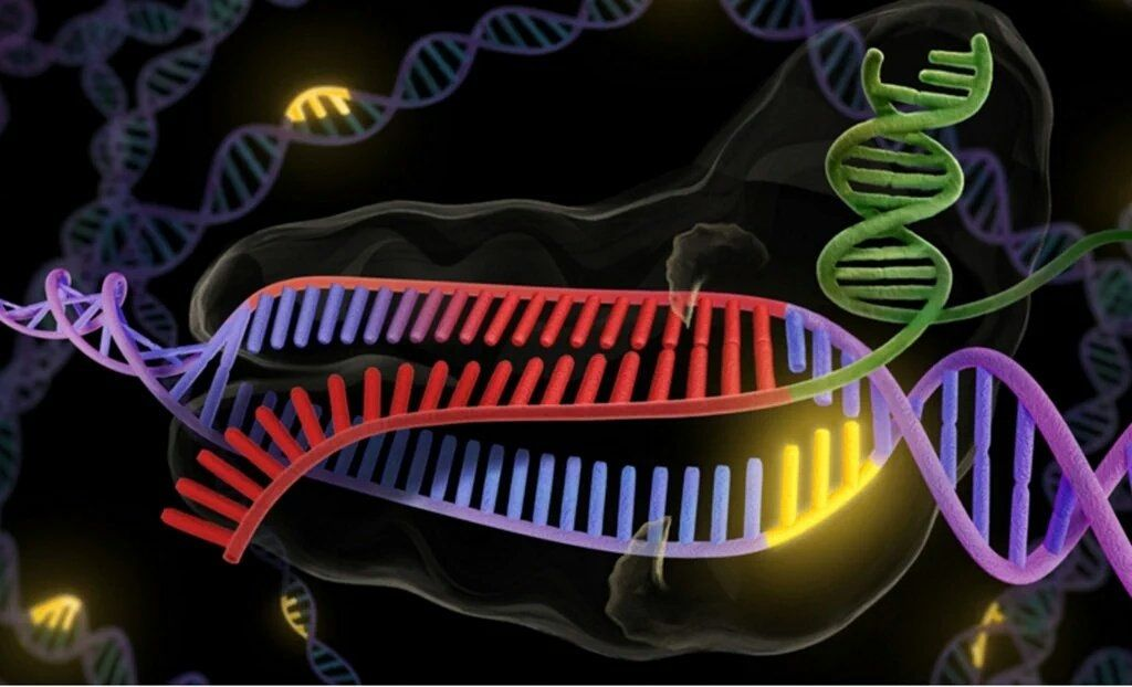 Dna testing and essay