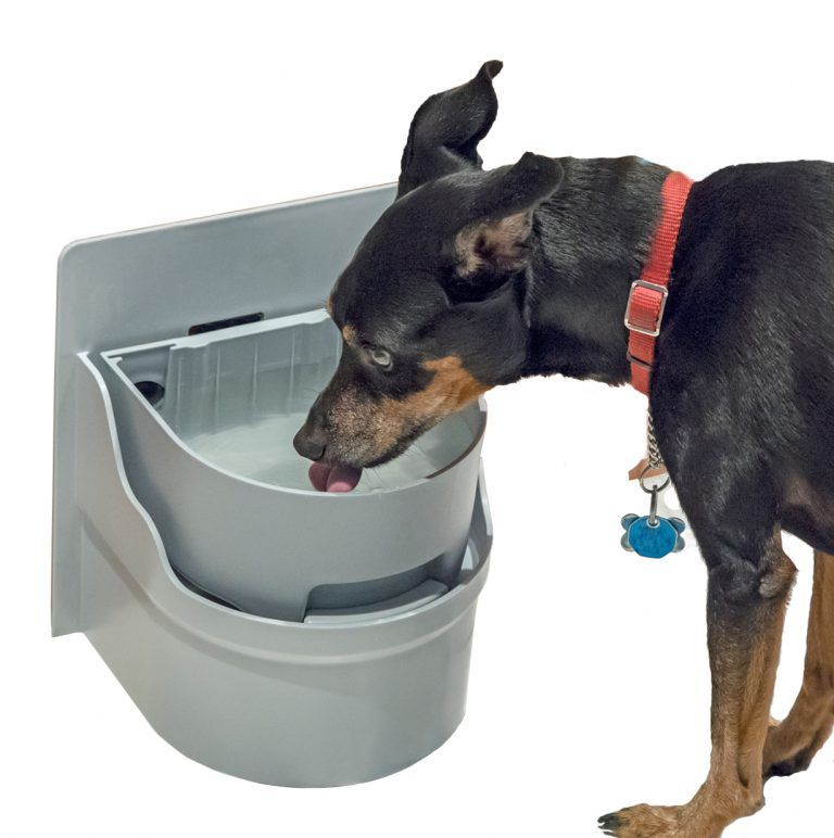 Perpetual Well Automatic Water Bowl Self Filling Water