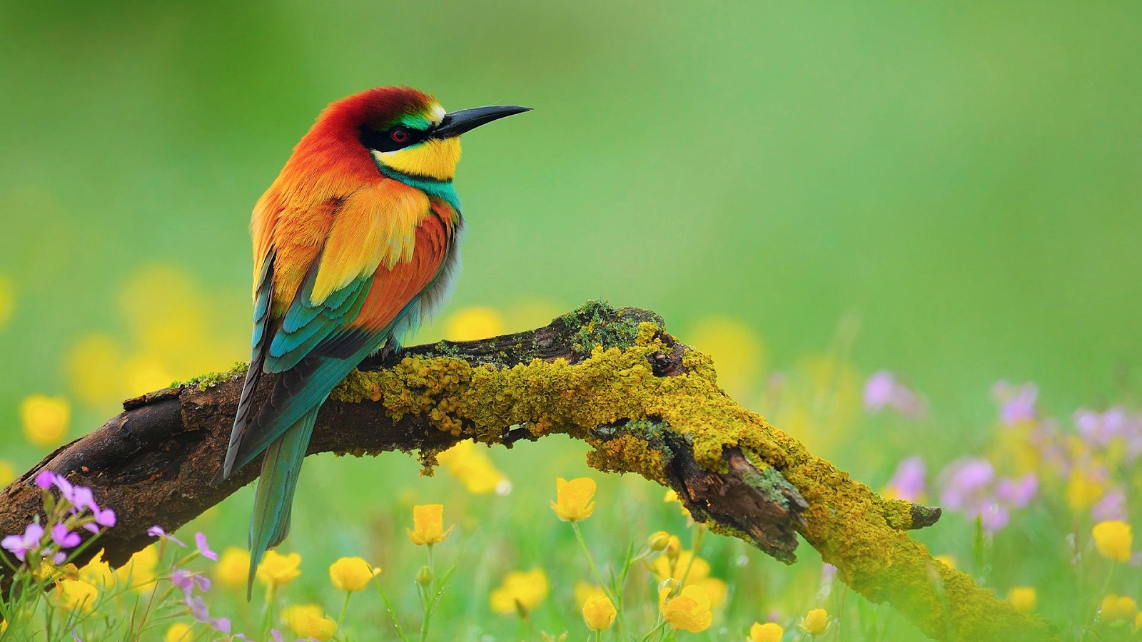 11 Png 1600 900 Fondo De Pantalla De Aves Pajaros Bonitos Arboles Con Pajaros