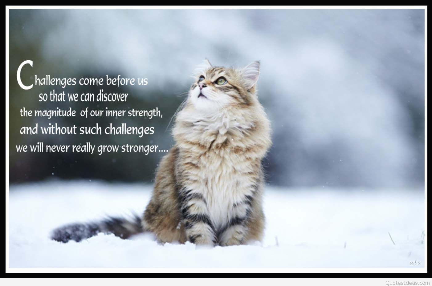 Cat Quotes Entrancing Winter Images With Quotes  Google Search  Winter  Pinterest