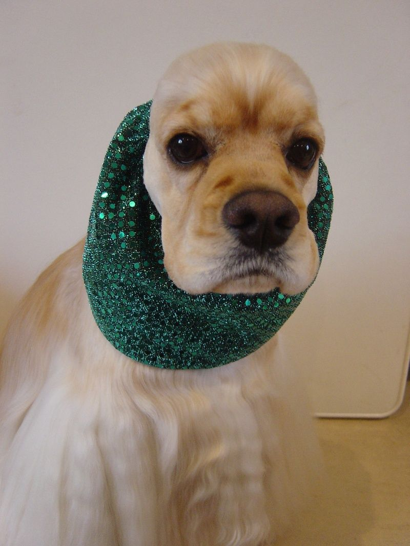 Snazzy Snoods Kats K9 Mobile Dog Grooming. No more