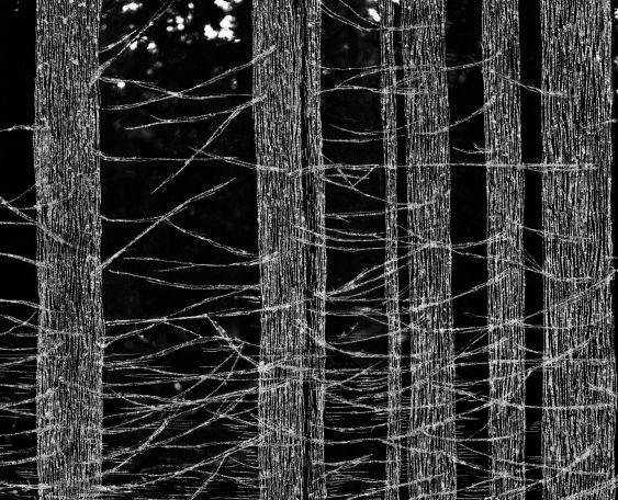 Hanna Råst: As light as the forest gets