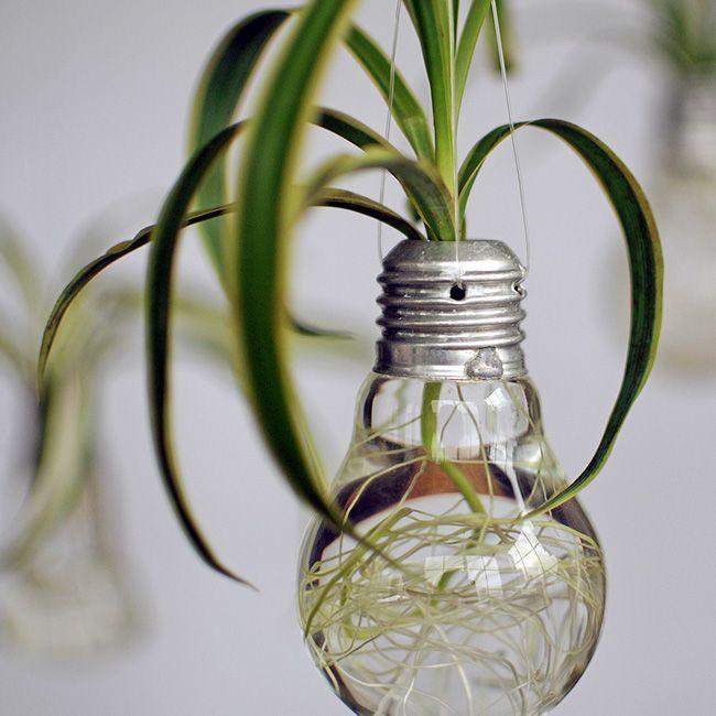 Focos reciclados plantas buscar con google jardin creativo pinterest foco reciclado y - Focos de interior ...