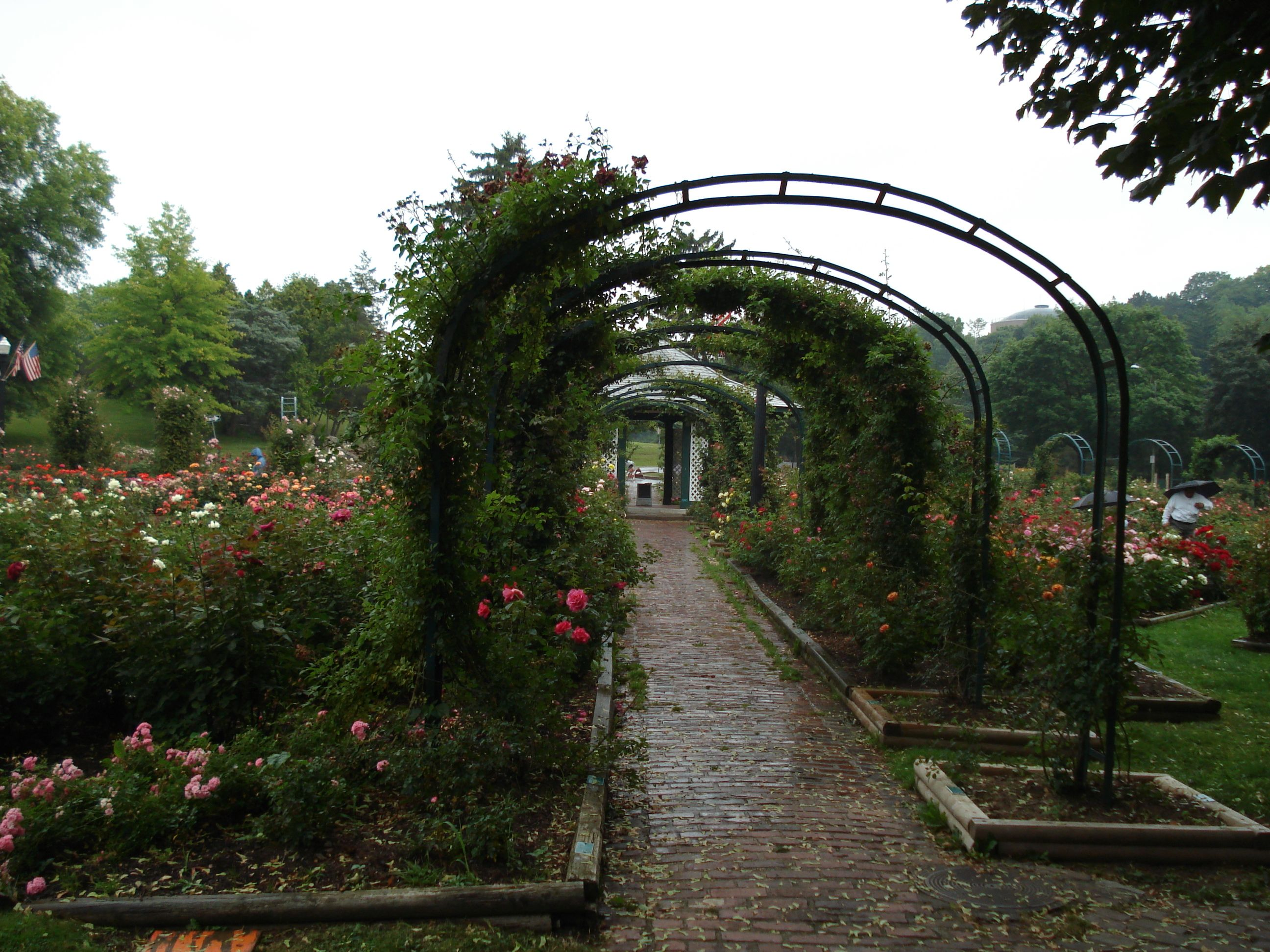 Dr. E.M. Mills Rose Garden is located in Thornden Park