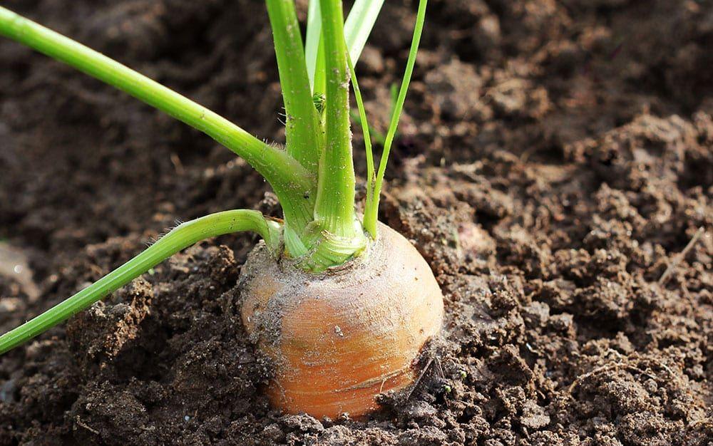 Top 10 Vegetable Crops For Containers Container Gardening Vegetables Deer Resistant Garden Healing Garden