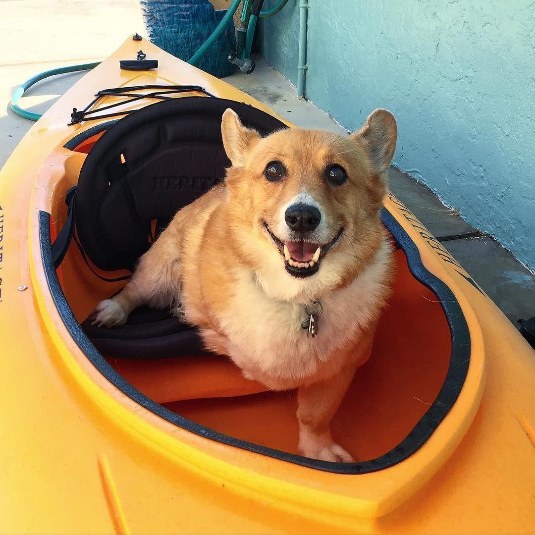 Corgmom and I are gonna go kayaking! She paddles and I yell at the birds. #kayak #kayaking #paddle #paddling #saltlife #water #livingonthewater #corgi #pembrokewelshcorgi #welshcorgi #afternoon #dogs_of_instagram #pets_of_instagram #warmafternoon #sunnyafternoon #corgisarelove #corgilove #corgilicious #corgisgonnacorg