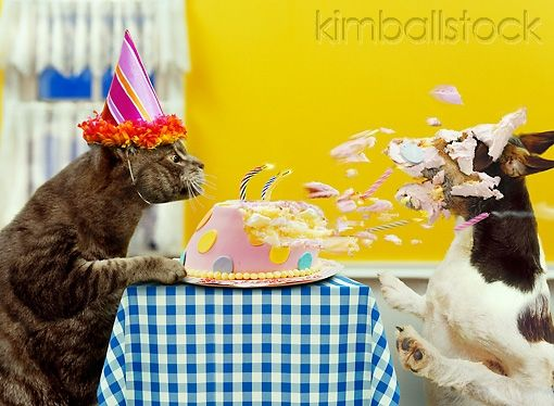 200 Laughs With Images Happy Birthday Funny Happy Birthday