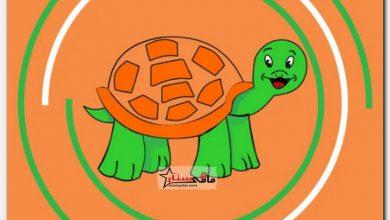 كيفية رسم سلحفاة خطوة بخطوة Turtle Drawing Drawings Mario Characters
