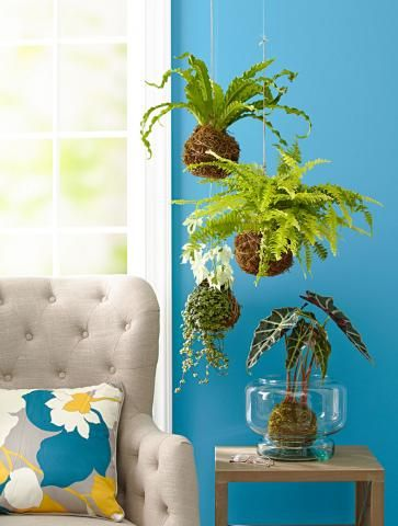 Make a pretty string garden with tropical plants and houseplants. Here are step-by-step instructions.