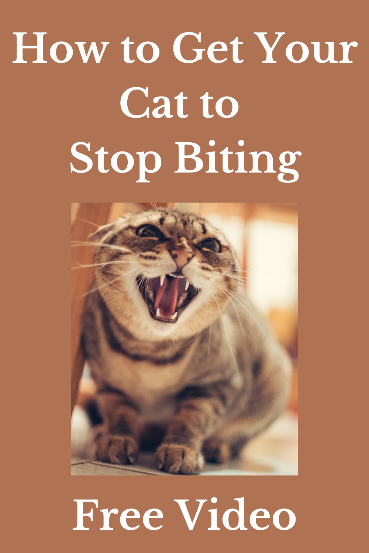 Pin On Cat Training