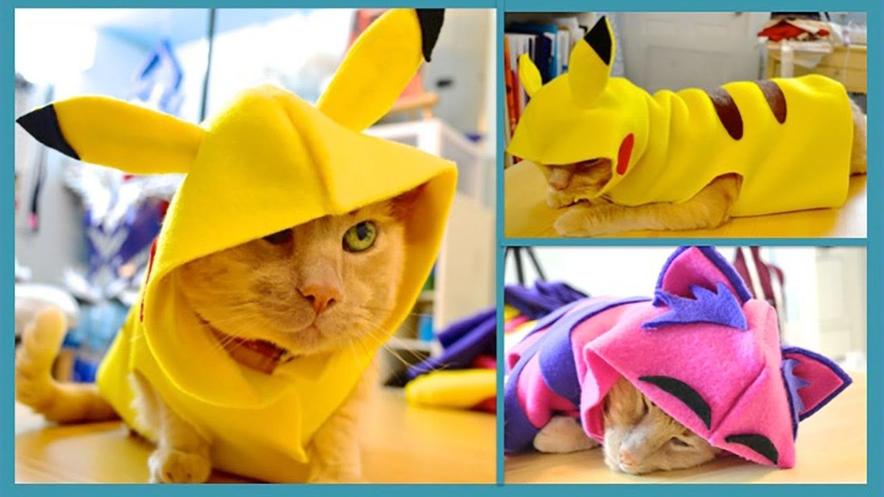 Diy Pet Costume How To Make A Hoodie For Your Cat No Sew