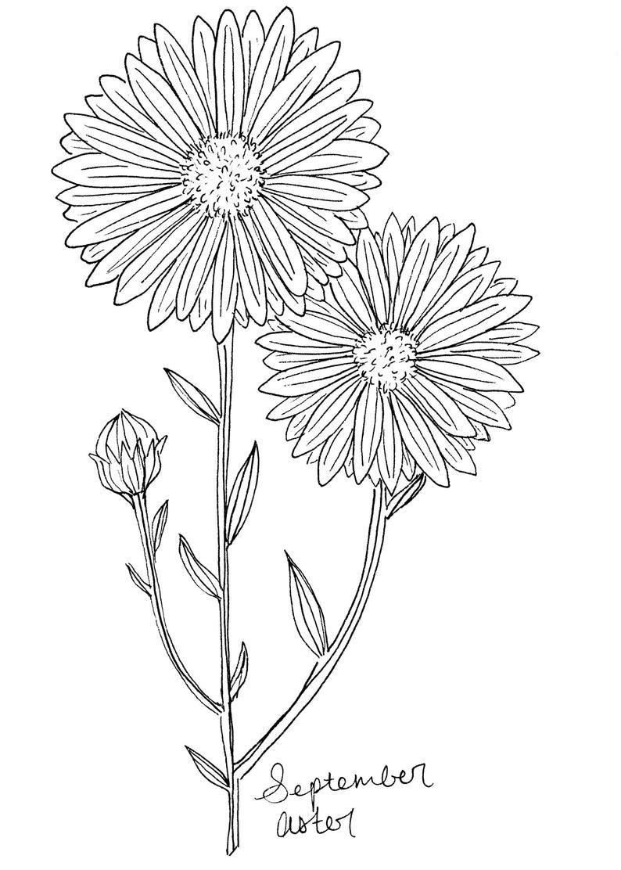 September Aster Art Print Birth Flower Print Aster Wall Etsy Aster Flower Tattoos Birth Flowers Birth Flower Tattoos