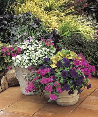 Delightful Patio Flower Pots. Patio Flower Pots 1000 Images About Planters Container  Gardening Spring