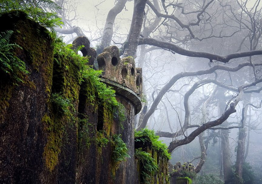 Remains of an abandoned castle in a foggy forest.  So intriguing.  So many questions.