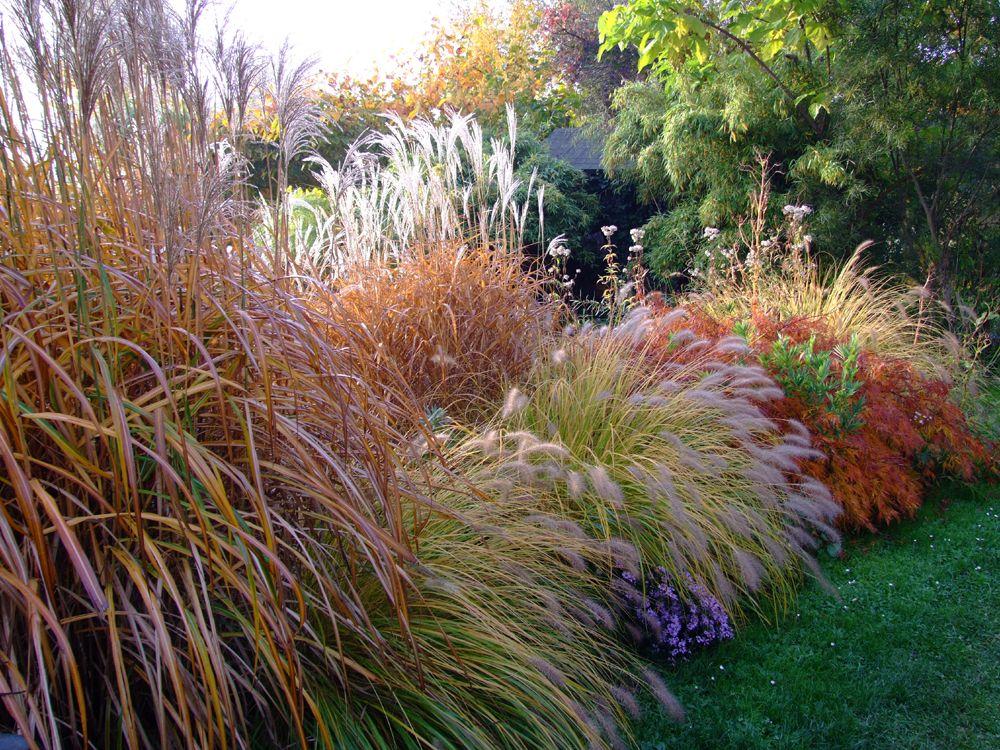 Herbst am Teichrand - Bilder und Fotos Garten Pinterest - gartenabgrenzung mit pflanzen